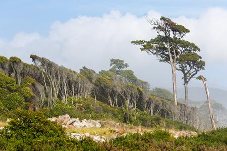 west  coast: Unique forest on West Coast, South Island ,New Nealand