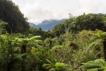 Native bush of New Zealand West Coast Stock fotó