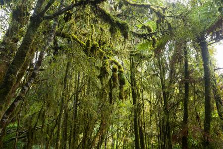 silver fern: Native bush of New Zealand West Coast Stock Photo