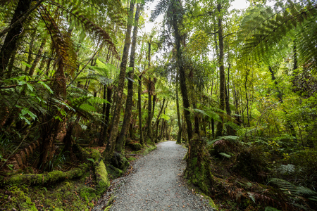 new scenery: Native bush of New Zealand West Coast Stock Photo