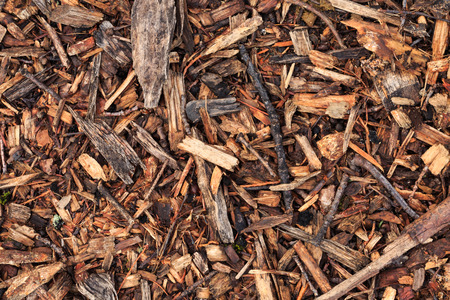 wood chip: Fresh wet wood chip from pine tree, texture background Stock Photo