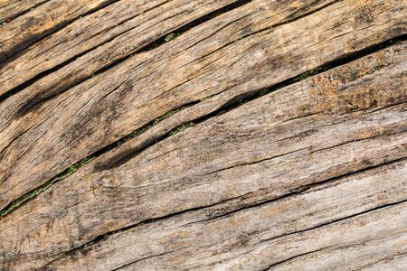 bark background: tree Bark texture background pattern