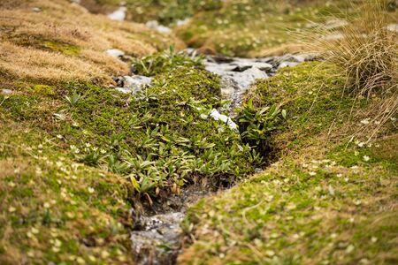 scrub grass: small stream with green grasses and lichen