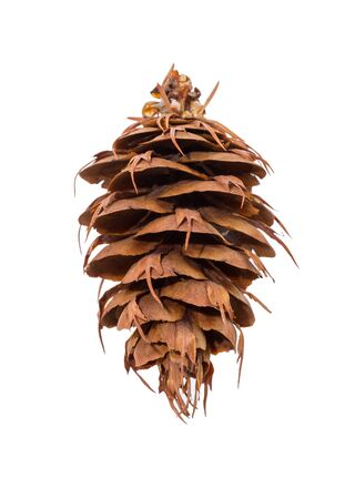 pine cone: pine cone isolated on white