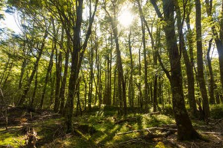 lush: beautiful green lush forest Stock Photo