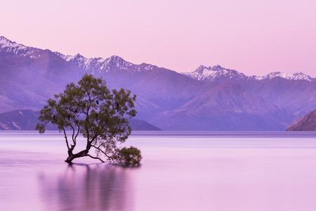 that: That Wanaka Tree at twilight