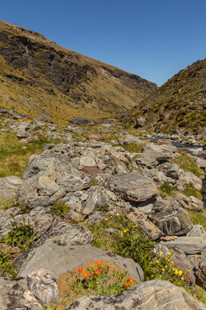 hieracium: mountain valley landscape on Wye Creek Track in New Zealand