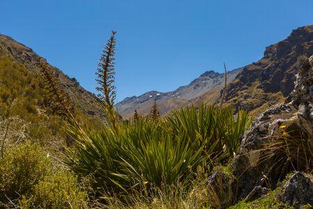 spaniard: spaniard on mountain in New Zealand Stock Photo