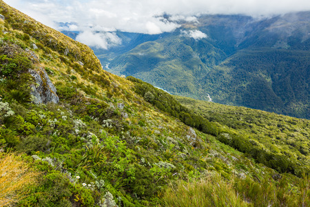 daisy flower: Routeburn Track in South Island, New Zealand