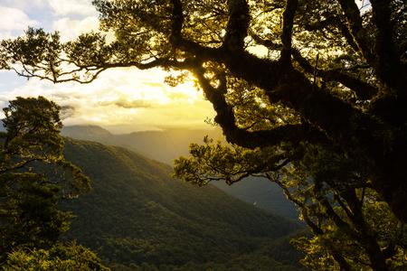 beautiful beech trees at sunset, New Zealand