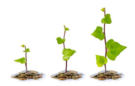 sufficiency: plants growing on coins isolated on white