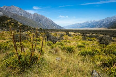 spaniard: Meadow and Spaniard on Mt Cook National Park, New Zealand Stock Photo