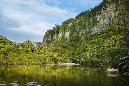 tropical native fern: Porarari River in Punakaiki, New Zealand
