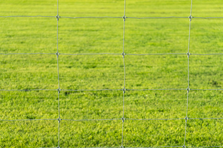metal wire: metal wire fence and green grass background