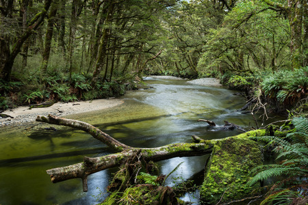 Lush forest along the Kepler Track, one of the New Zealand Great Walks