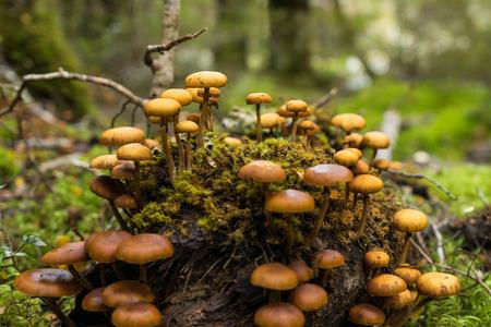 kepler: Forrest mushroom at Kepler track, New Zealand