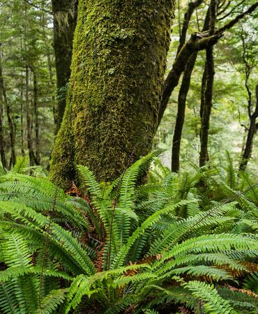 anau: Moss on the tree and fern Stock Photo