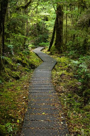 kepler: Path along the Kepler track in Te Anau, New Zealand