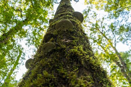 anau: Moss on the tree and fern Stock Photo