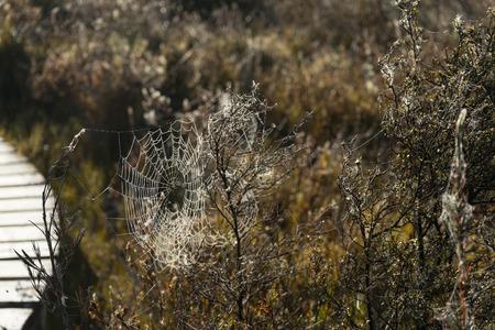 kepler: Spider web along the Kepler track in Te Anau, New Zealand Stock Photo