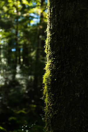 anau: Moss on the tree and fern at Kepler track in Te Anau, New Zealand Stock Photo