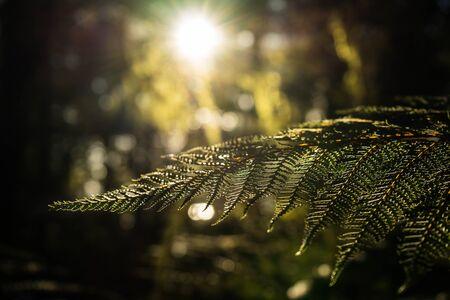 kepler: Fern leaves and sunlight at Kepler track in New Zealand Stock Photo