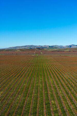 marlborough: View of the vineyards in the Marlborough region, New Zealand Stock Photo