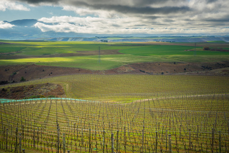 marlborough: Vineyard in Central Otago Region, New Zealand Stock Photo