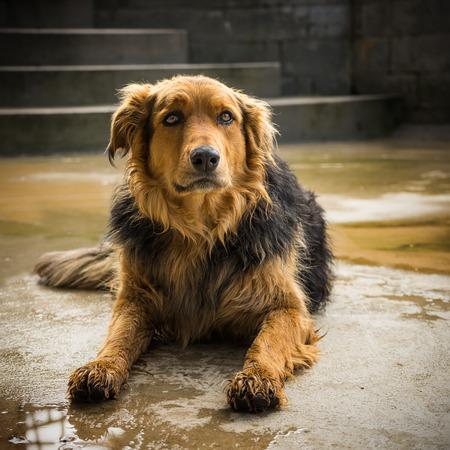 Portrait of an adorable farm brown dog