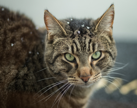 Cat with some snow flakes on its head in winter Stok Fotoğraf