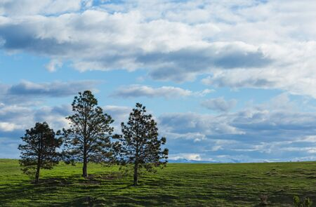 pine trees on the hill and cloudy sky background Stok Fotoğraf - 68490150