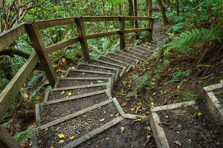 Treppe durch native Neuseeland Busch Standard-Bild - 68742736