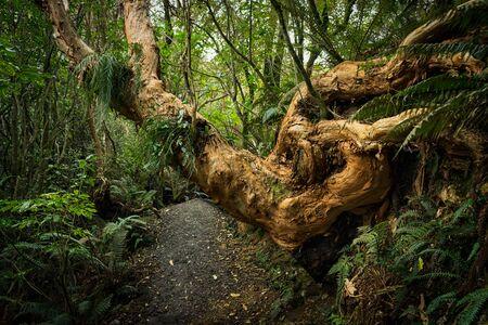Sanders Falls Walk in Waimate, Neuseeland Standard-Bild - 68742734