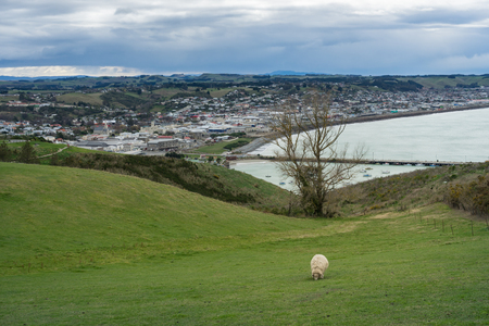 oamaru: Overlook view of Oamaru with sheep at the foreground Stock Photo