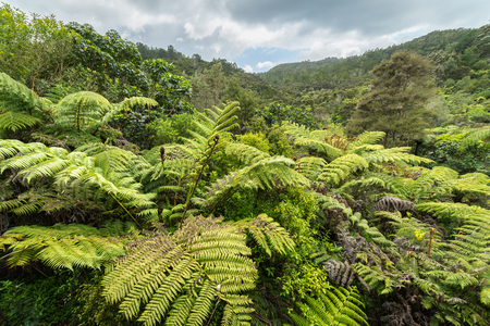 Native bush of New Zealand Stock Photo