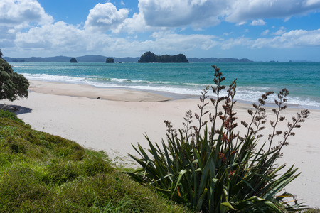 Beach in Coromandel Peninsula, North Island, New Zealand