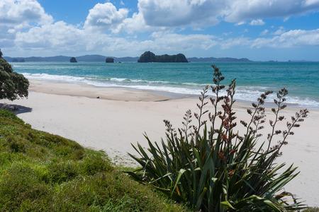Strand in Coromandel-Halbinsel, Nordinsel, Neuseeland Standard-Bild - 70014567