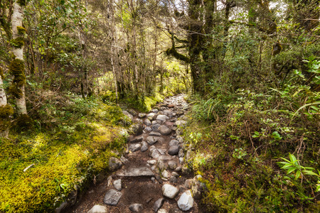 Rocks path through New Zealand Beech forest