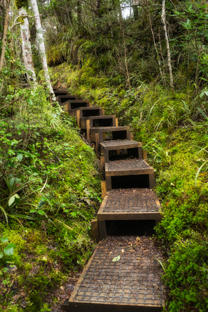 Wooden stairs through green lush forest in New Zealand Standard-Bild
