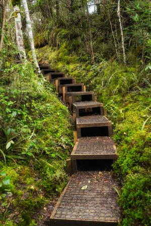 Holztreppen durch üppigen grünen Wald in Neuseeland Standard-Bild - 70641105