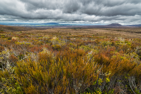 Beautiful alpine meadows in Tongariro national park, New Zealand