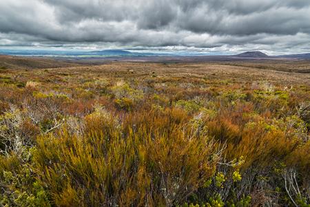Schöne Almwiesen in Tongariro Nationalpark, Neuseeland Standard-Bild - 70723416