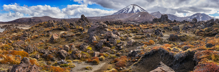 Panoramic view of Tongariro national park and Mt Ngauruhoe with colorful groundcover plant at foreground in New Zealand Stok Fotoğraf