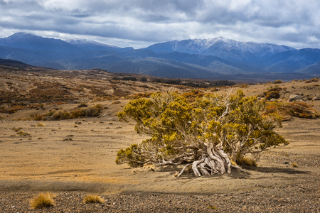 desert-like areas in Tongariro national park, New Zealand
