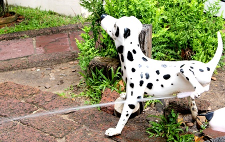 The dog peeing on the floor Stock Photo - 24377397