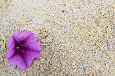 The violet flower on sand background photo
