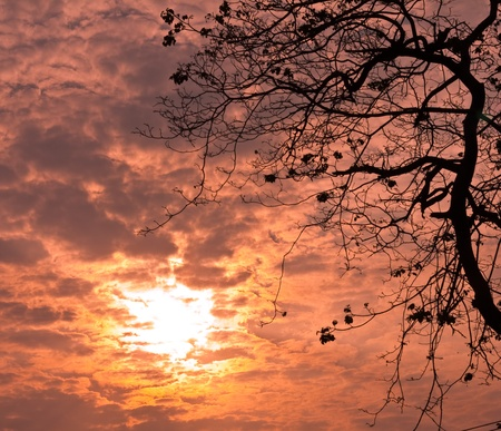 After sunset sky orange trees, the evening atmosphere photo