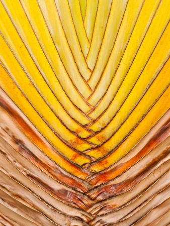 Shaft is a type of banana leaves cascaded like a blow Stock Photo - 9558281