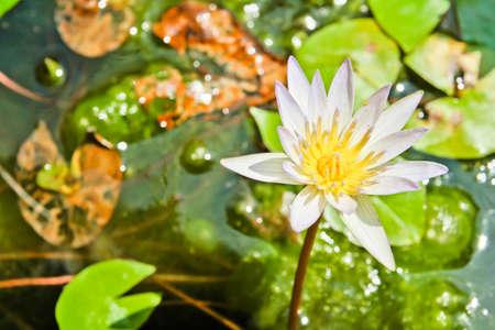 limbo: lotus flowers in the sink
