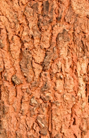 Patterns of tree bark texture background photo